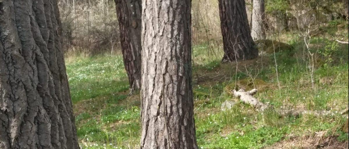 Stenarna och skogen #Blogg10026