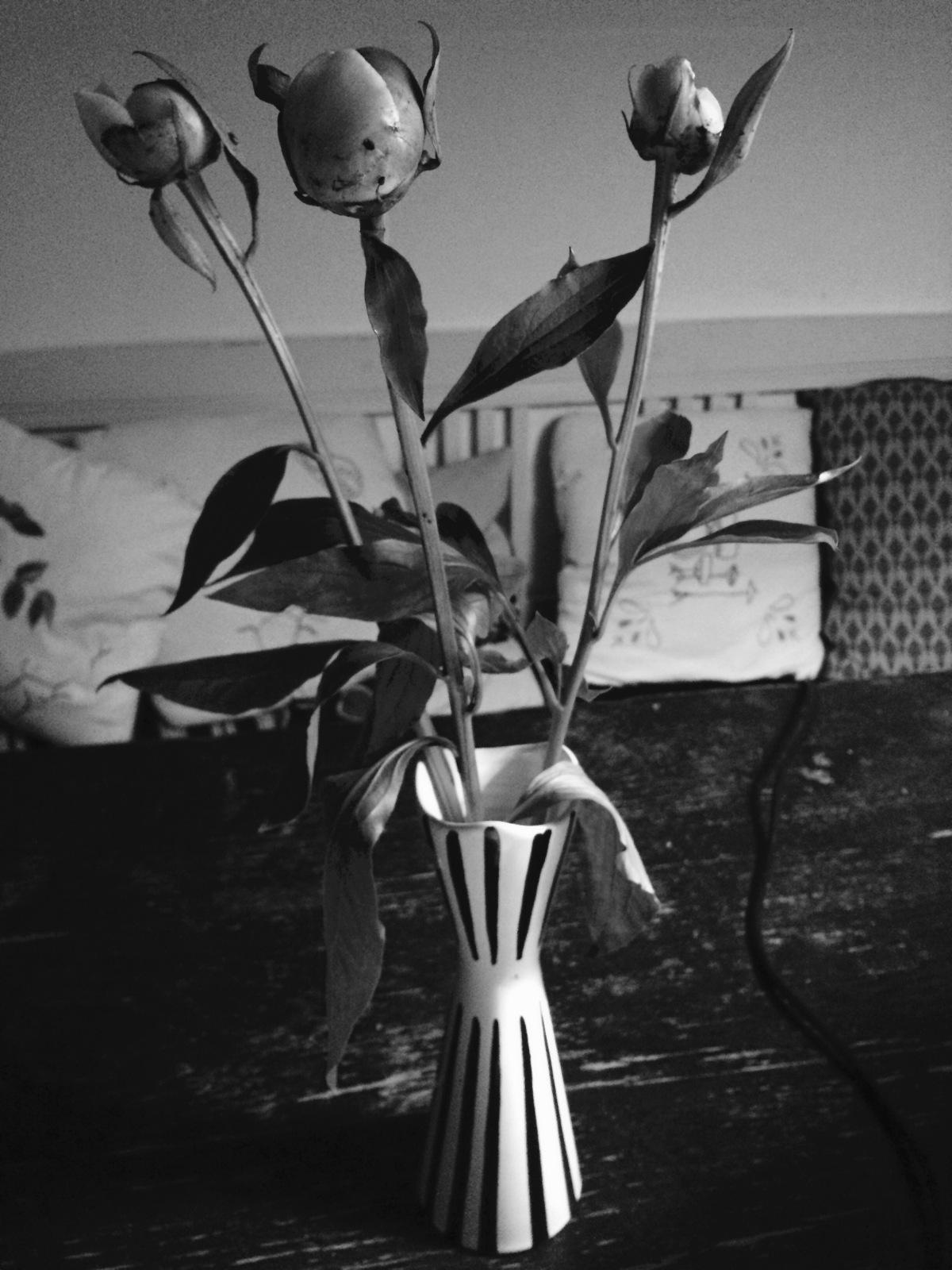 Svart och vitt och svartvitt #Blogg10078